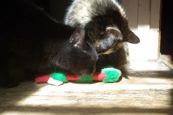 black cat and tortoiseshell cat with catnip toy