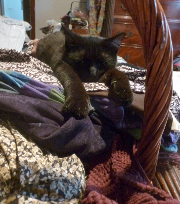 black cat on laundry