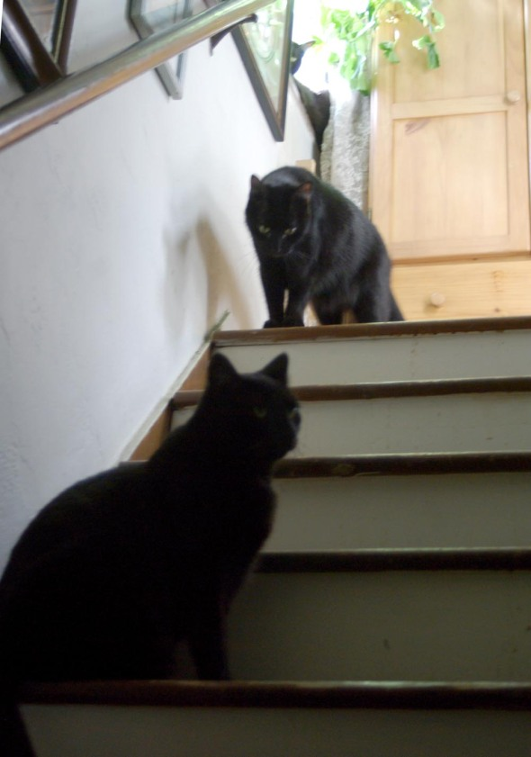 three black cats on steps