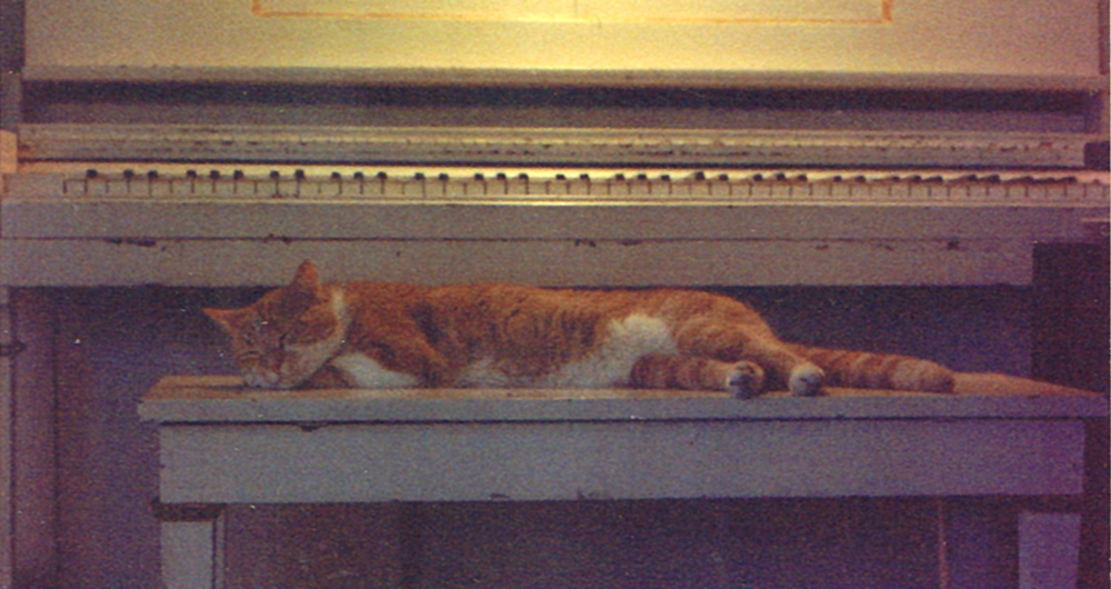orange and white cat on piano bench