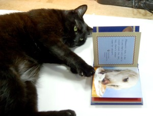 black cat with book