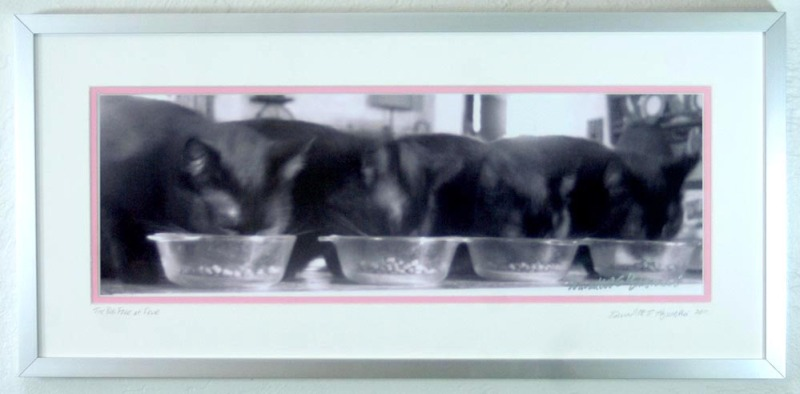 matted framed photo of four black cats eating