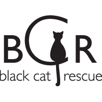 black cat rescue boston logo