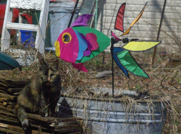 cat outdoors with colorful ornament