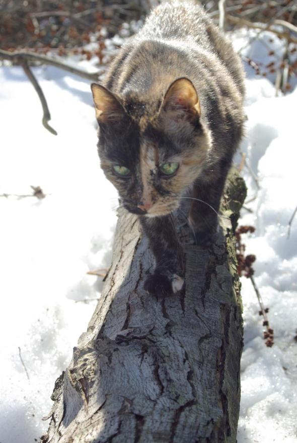 tortoiseshell cat on branch