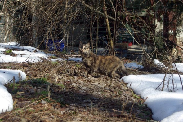 tortoiseshell cat sniffing stick