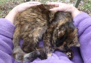 tortoiseshell cat in purple