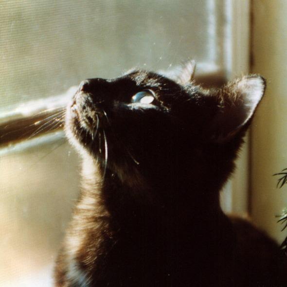 tortoiseshell cat lookign up