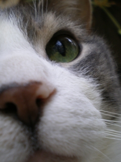 cat's nose looking