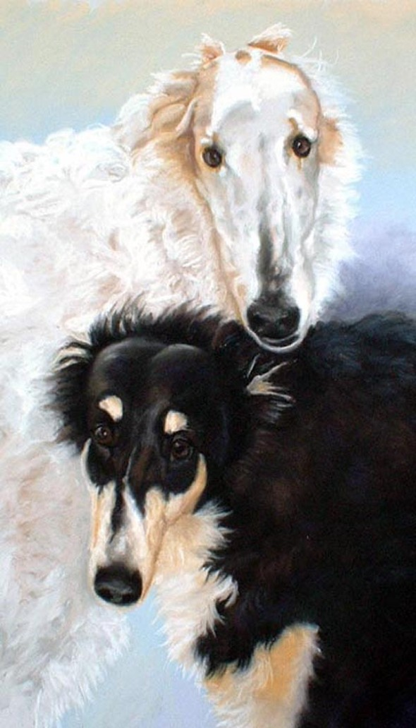 portrait of two borzoi dogs