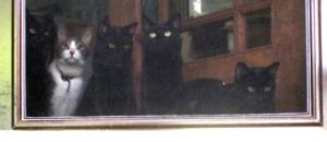 four cats at door