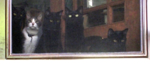 four cats at door