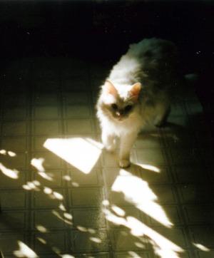 white cat in sun
