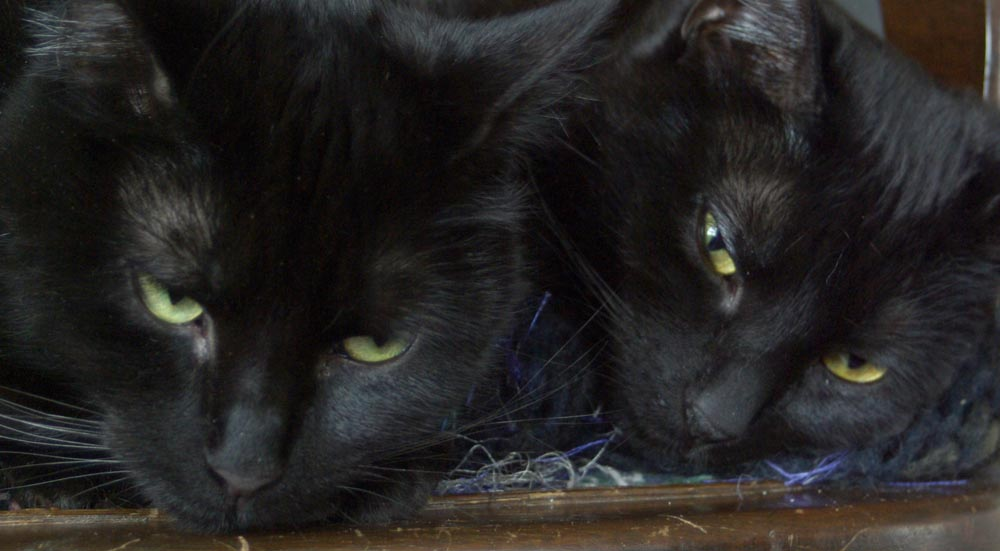 two black cats with eyes