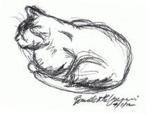 sketch of cat