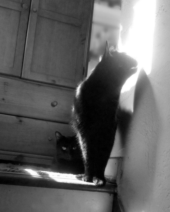 black and white photo of two black cats