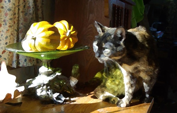 cat with squashes