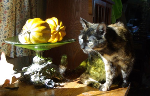 cat with squashes and green dish