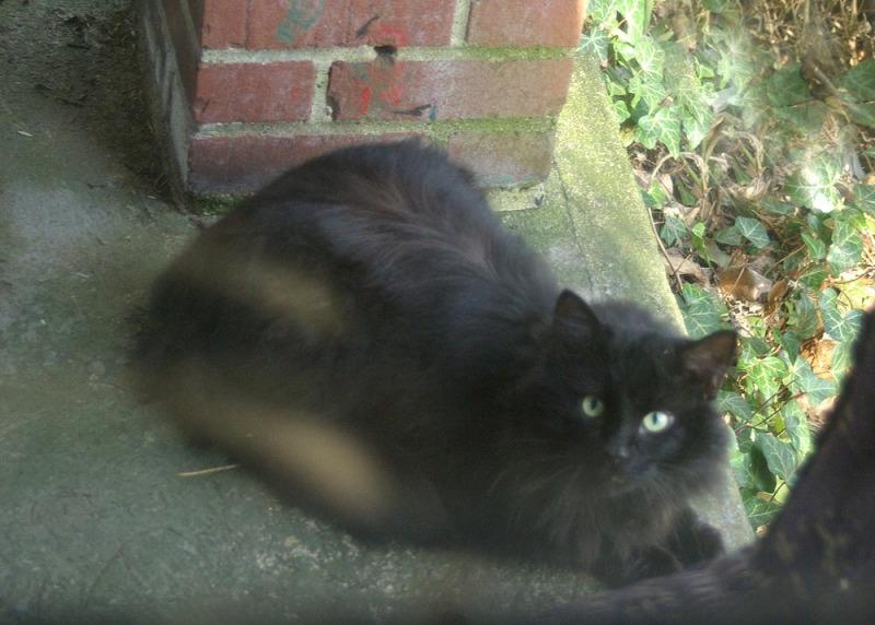 black cat on porch