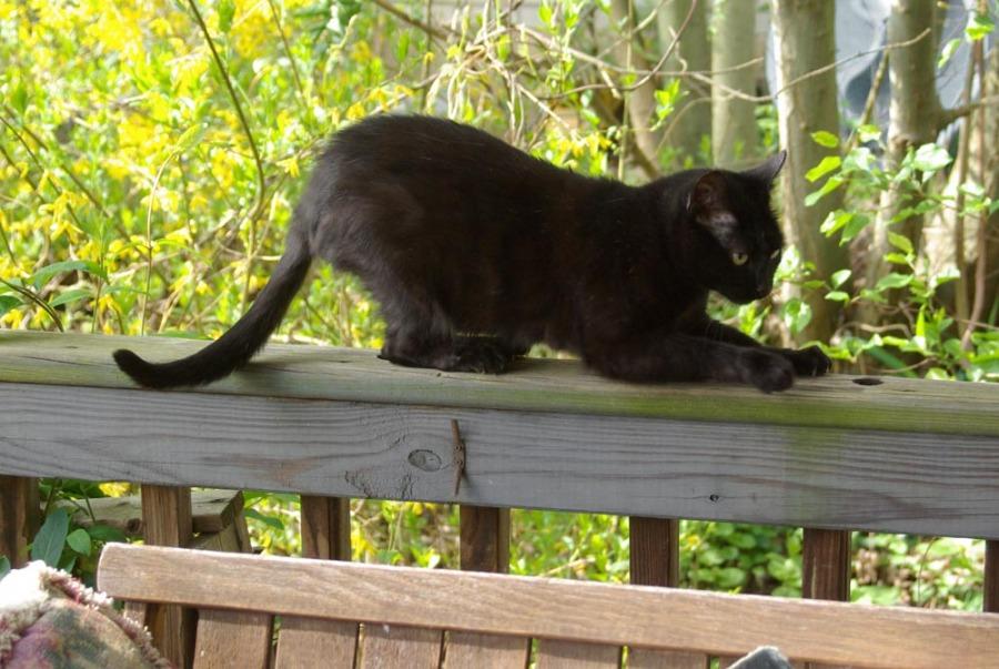 black cat on deck railing