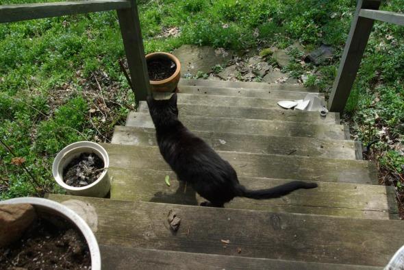 black cat on deck steps