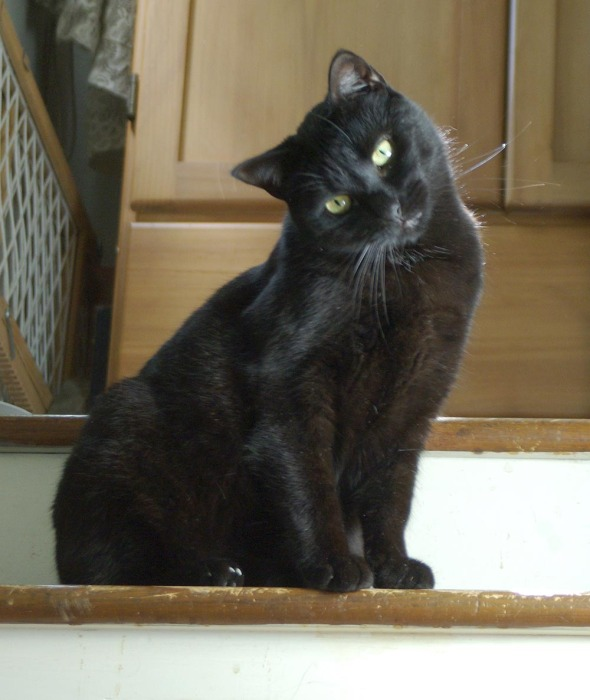 black cat with head tilted