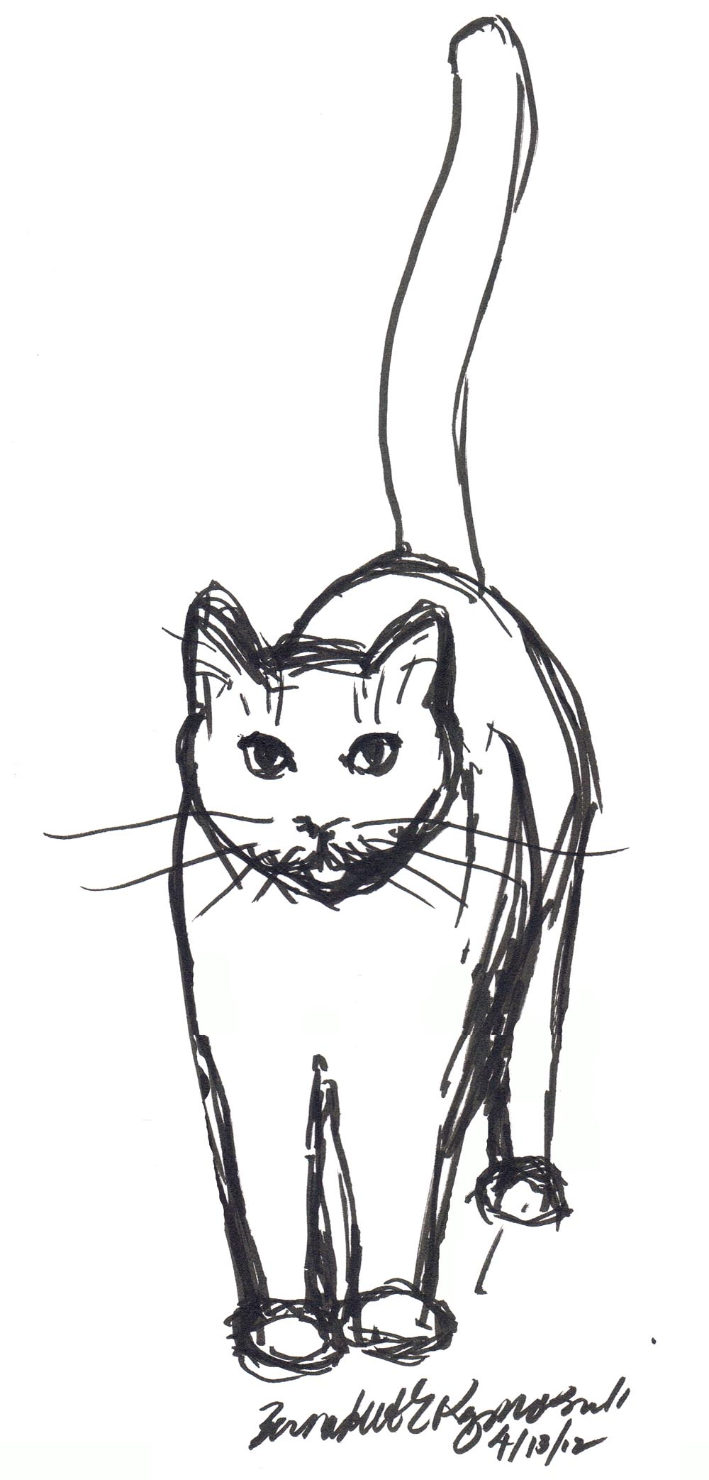 marker sketch of cat standing