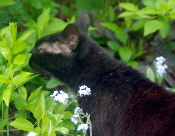 black cat sniffing green leaves
