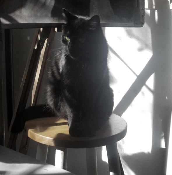 black cat on stool