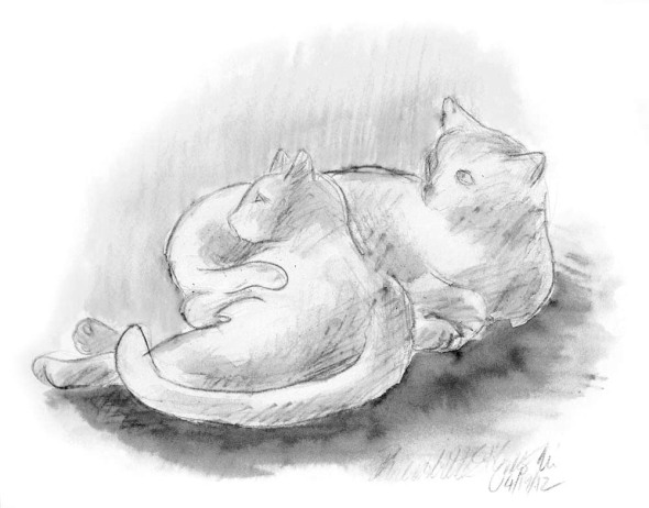grayscale version of two cats