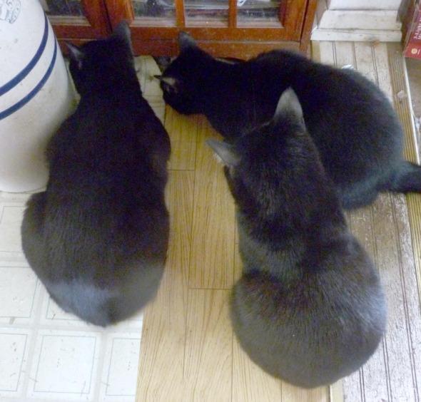 three black cats looking under book case