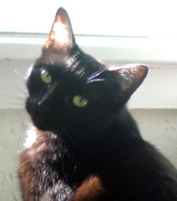 black cat closeup