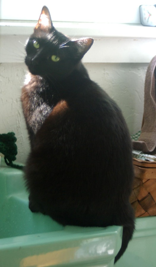 black cat on green sink