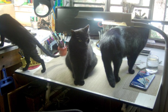 three black cats in studio