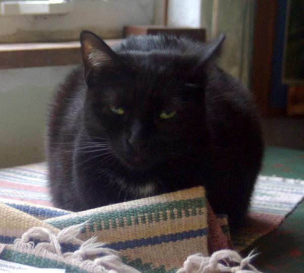 cat behind wrinkle in rug