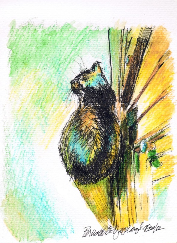 ink and watercolor sketch of a cat