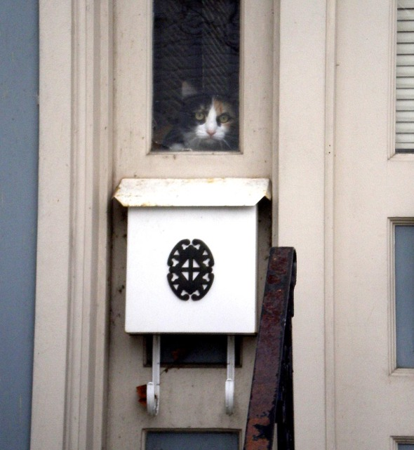 cat looking out window above mailbox