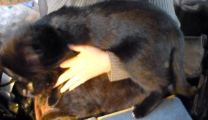 holding two black cats on lap