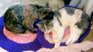 tortoiseshell cat bathing calico cat