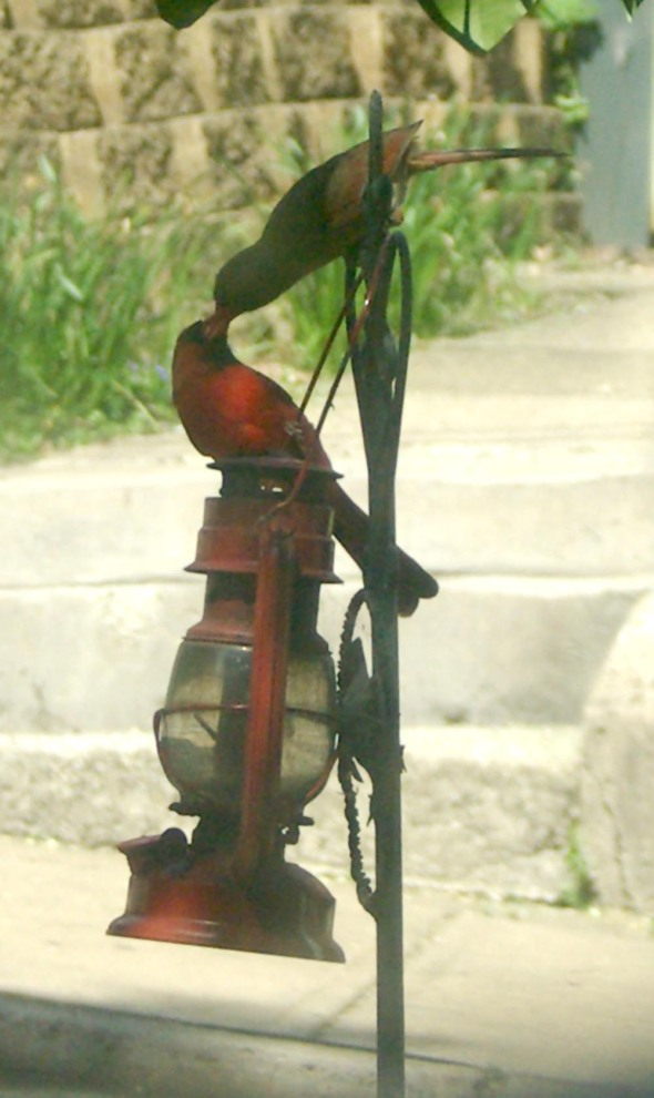 cardinals on post