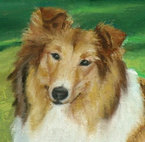 detail of collie portrait