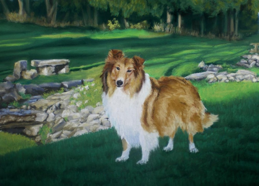 portrait of collie in park