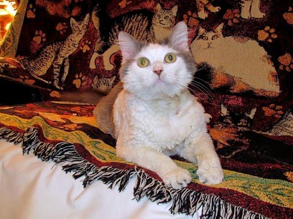 cat on blanket