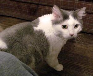 cat looking backward
