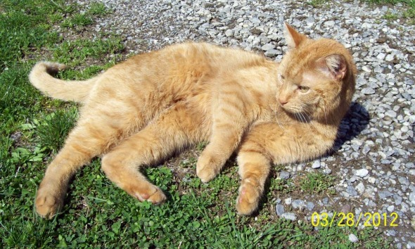 photo of orange cat outdoors