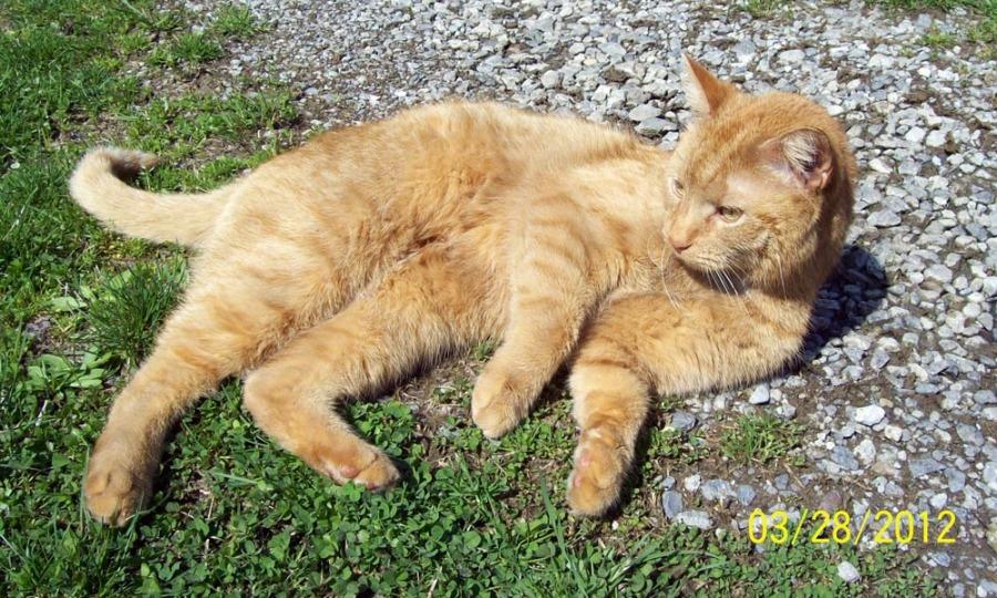 photo of orange cat outdoors