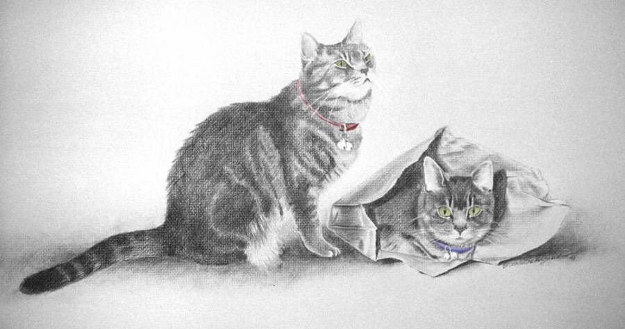 pencil portrait of two gray cats