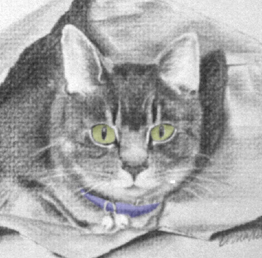 pencil portrait of tabby cat with green eyes and blue collar