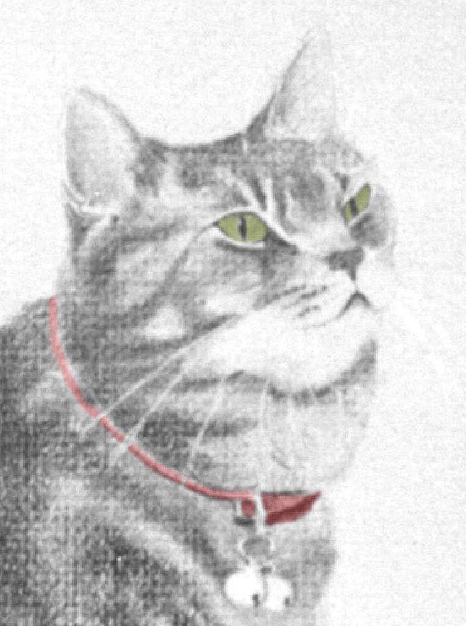 pencil portrait of gray tabby cat with red collar and green eyes