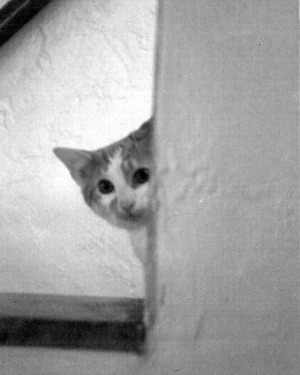 kitten peeks around the corner